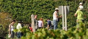 Rebsortenwanderung Sierre-Salgesch / 12. September 2020 @ Salgesch | Wallis | Schweiz